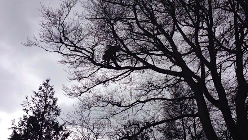 tree surgery and arboricultural services